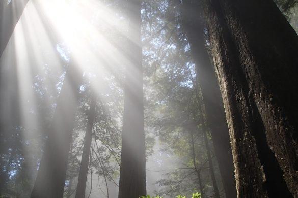 Find Your Park: Redwood National Park