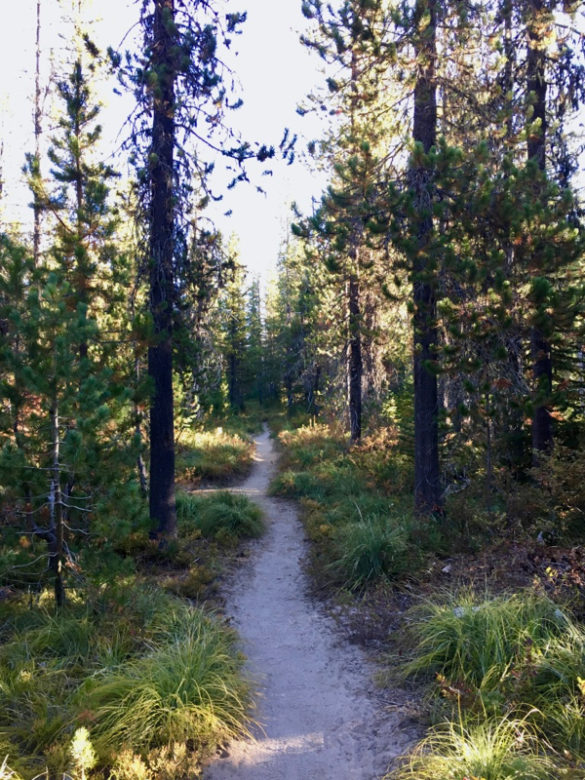 PCT: From One Wilderness to Another